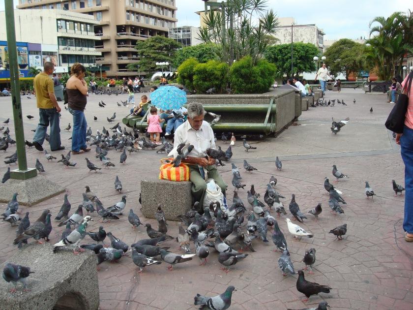 Of Birds